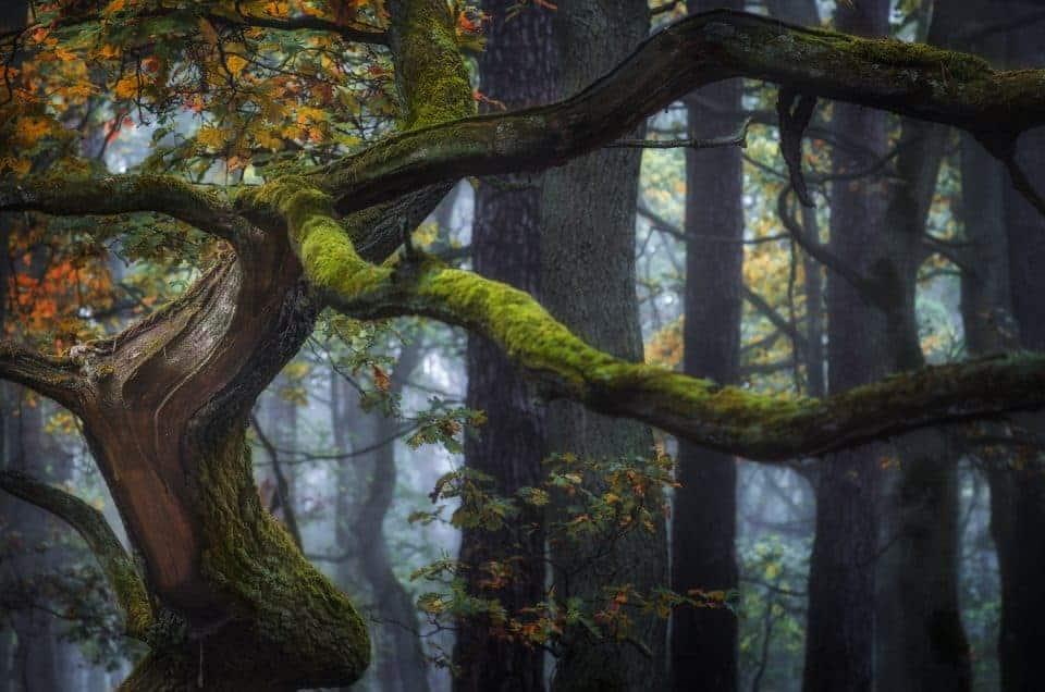 Jak fotografować las ? 5 praktycznych porad.
